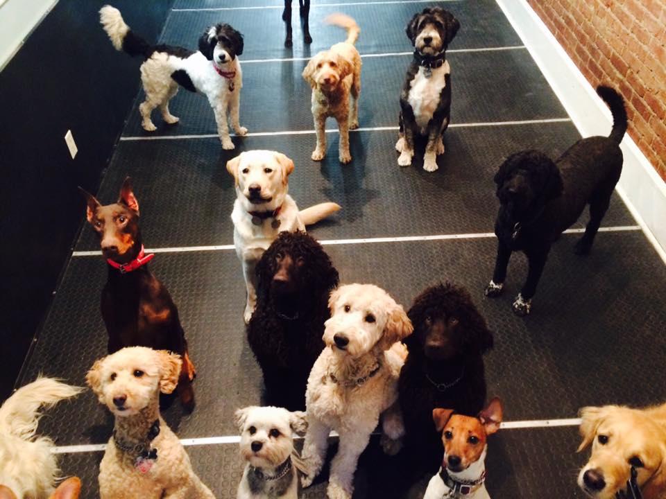 Doggy Daycare Image